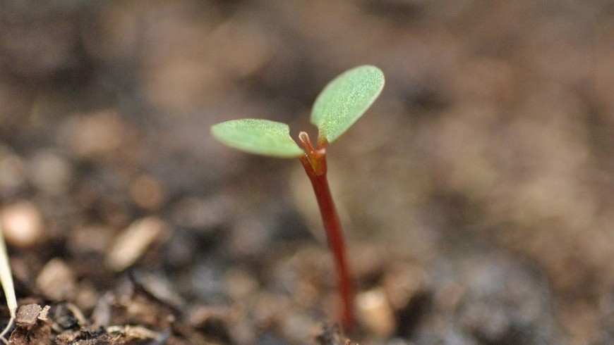 green habits: Plant a tree