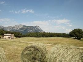 Agriturismo Malga Riondera