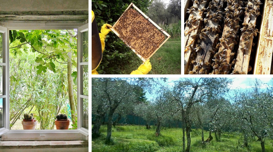 At Borgo4case, children and grown-ups get to discover bees' life and sustainability