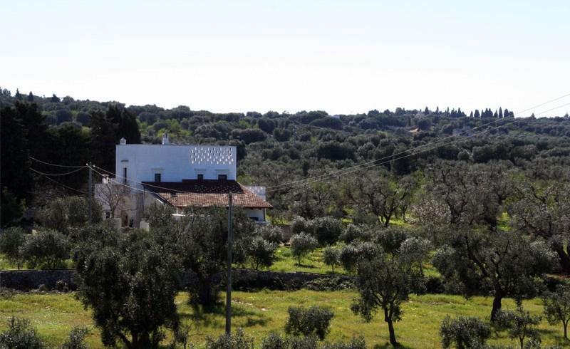 Masseria Bellolio: your eco-wedding between ancient olive trees