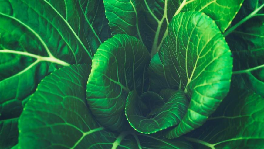 impact on the health of lundi vert