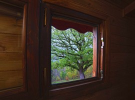The monumental oak seen from the small window in the bathroom of the tree-house