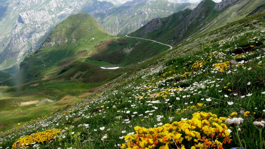 flowers, mountain landscape near Limone Piemonte