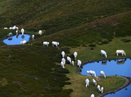 Sheeps,mountains