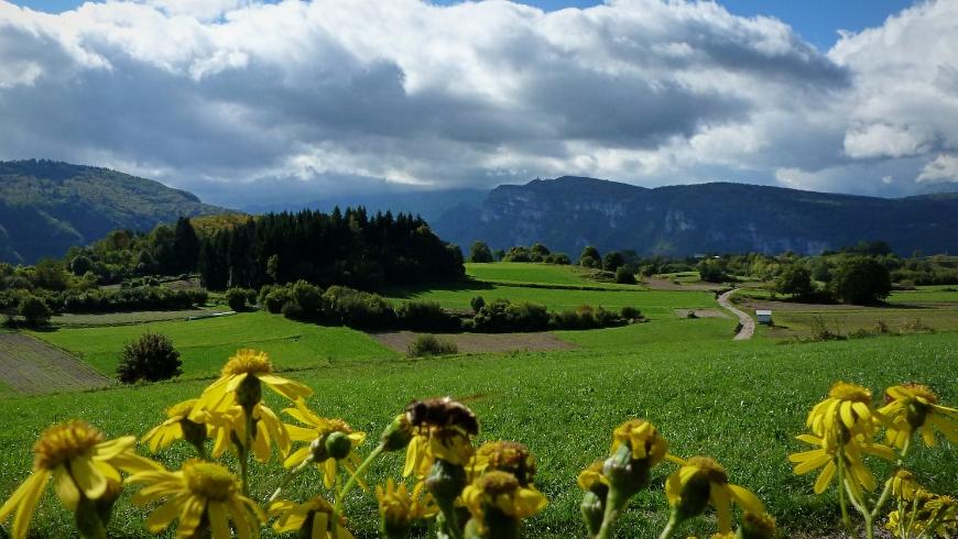 Rotzo's nature, Altopiano dei Sette Comuni, Asiago, Italy