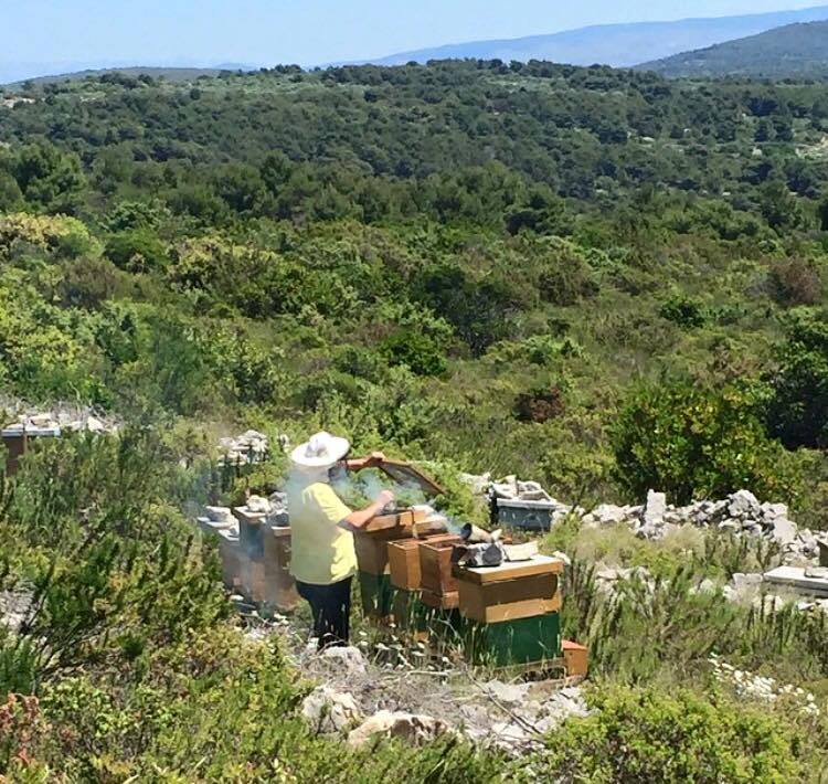 Honey Bee Holidays in Slovenia: spend a day with a beekeeper on island Šolta and make your own honey