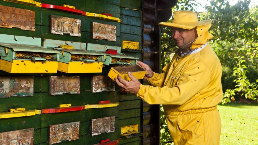 Beekeeper Slovenia