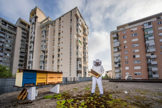 Urban beekeeping Ljubljana