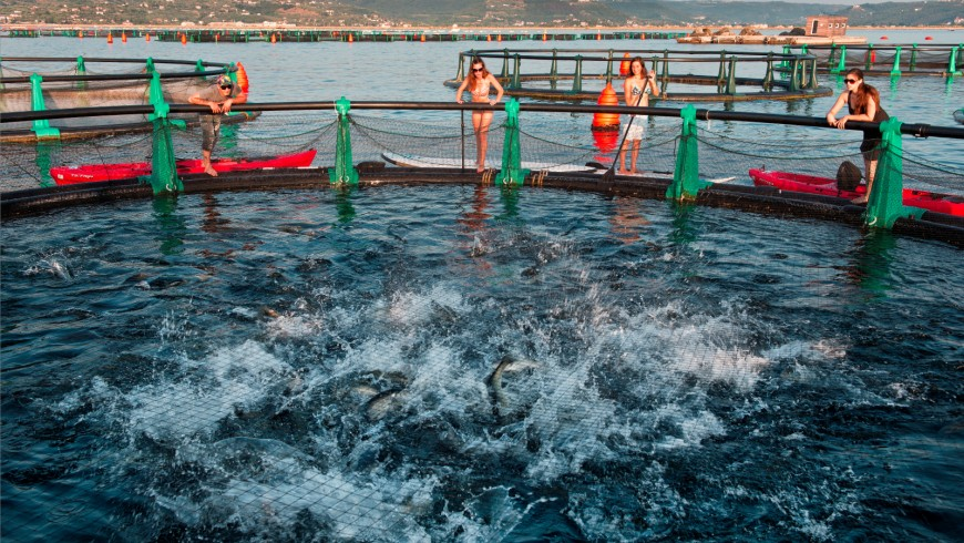 Spend a day on a fish farm with the highest quality sea bass in the world