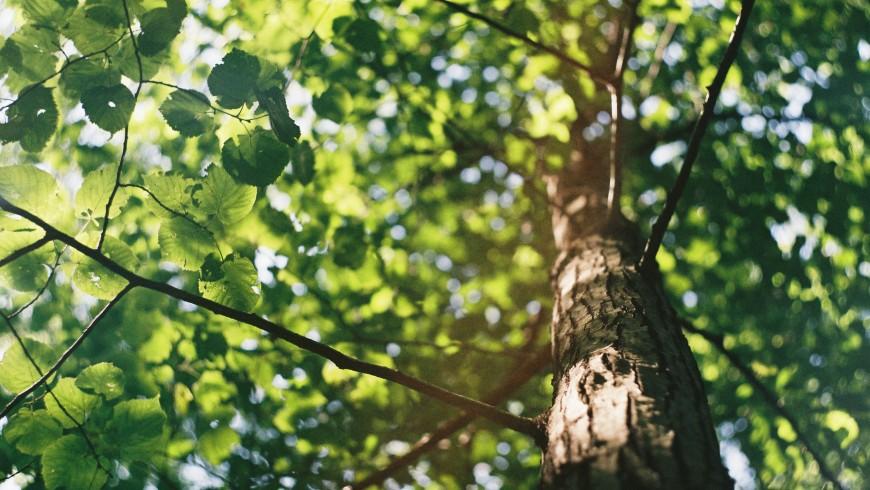 viaggiando con Ecobnb risparmi alberi e puoi contribuire a piantare nuovi alberi