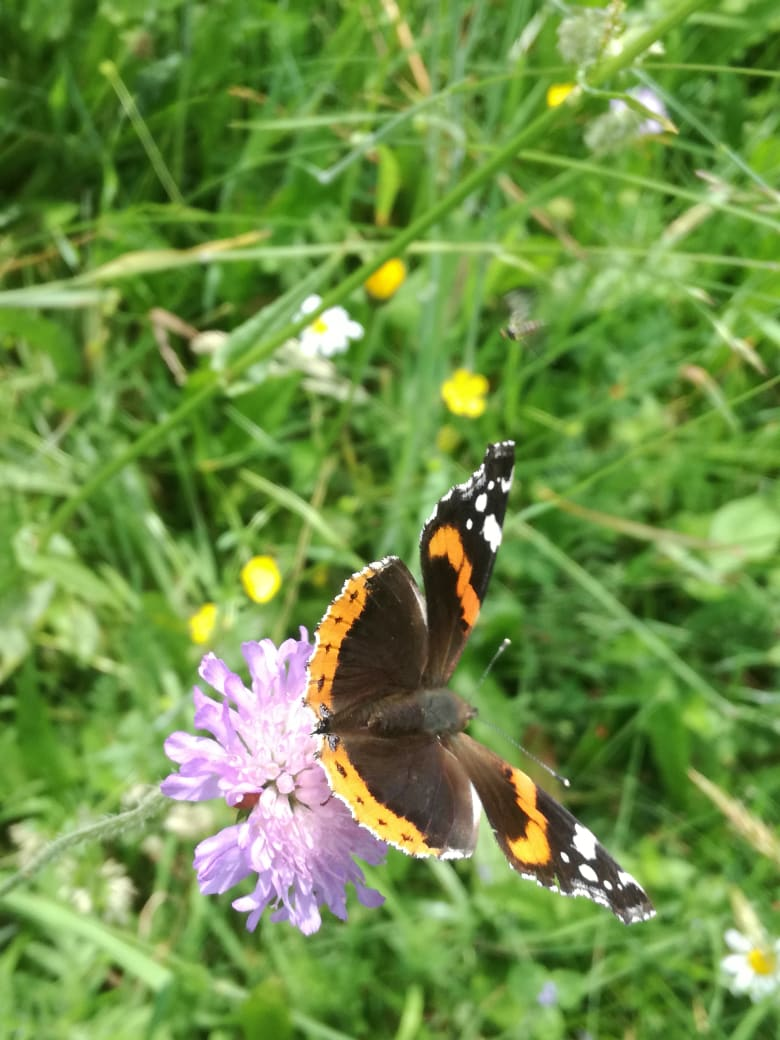 Valley of butterflies in National Park Risnjak