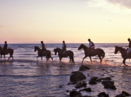 people horseback in sea shore