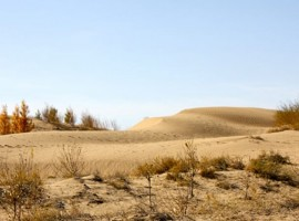 The Gobi Desert, once forest