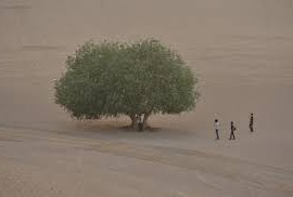 A tree surrounded by the desert