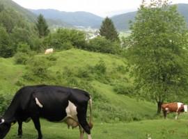 """Turistična kmetija """"Pri Andreju"""""""