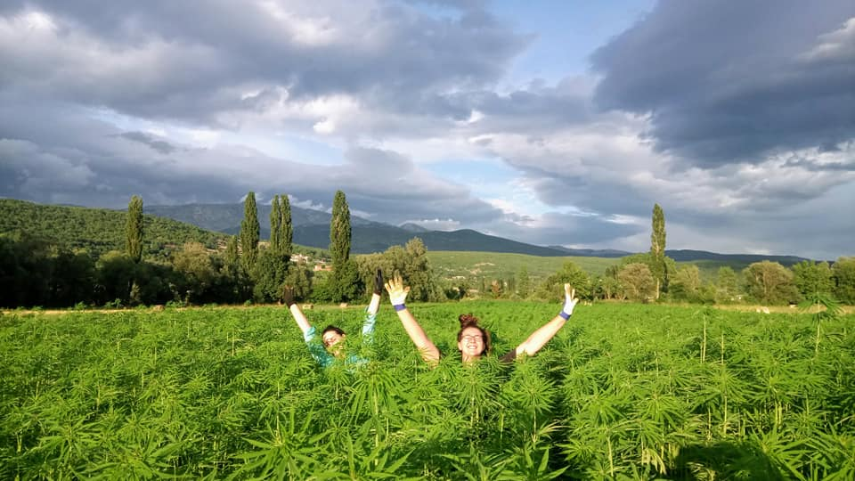 top outstanding experiences in Dalmatia - Hemp farm Moro