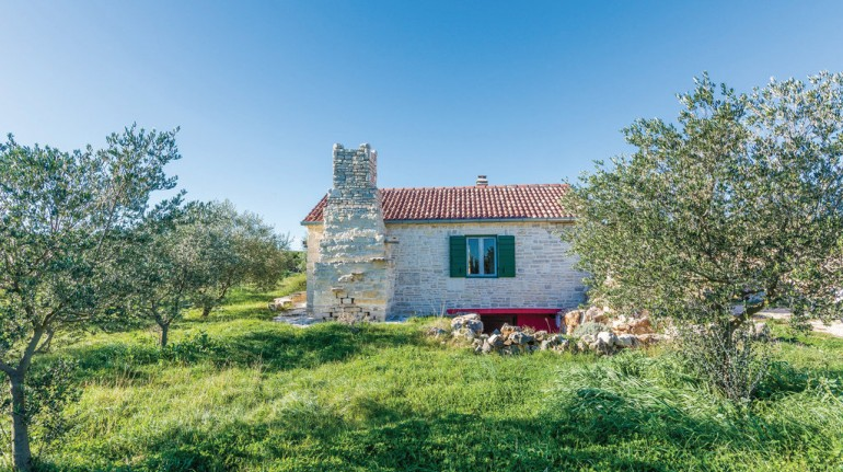 Olive garden Paljka