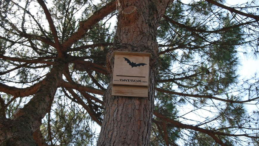 Batbox in Comacchio hanging on a tree that shows that bats are in the area