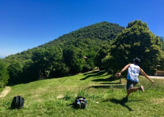 Disc golf basket inside an olive grove