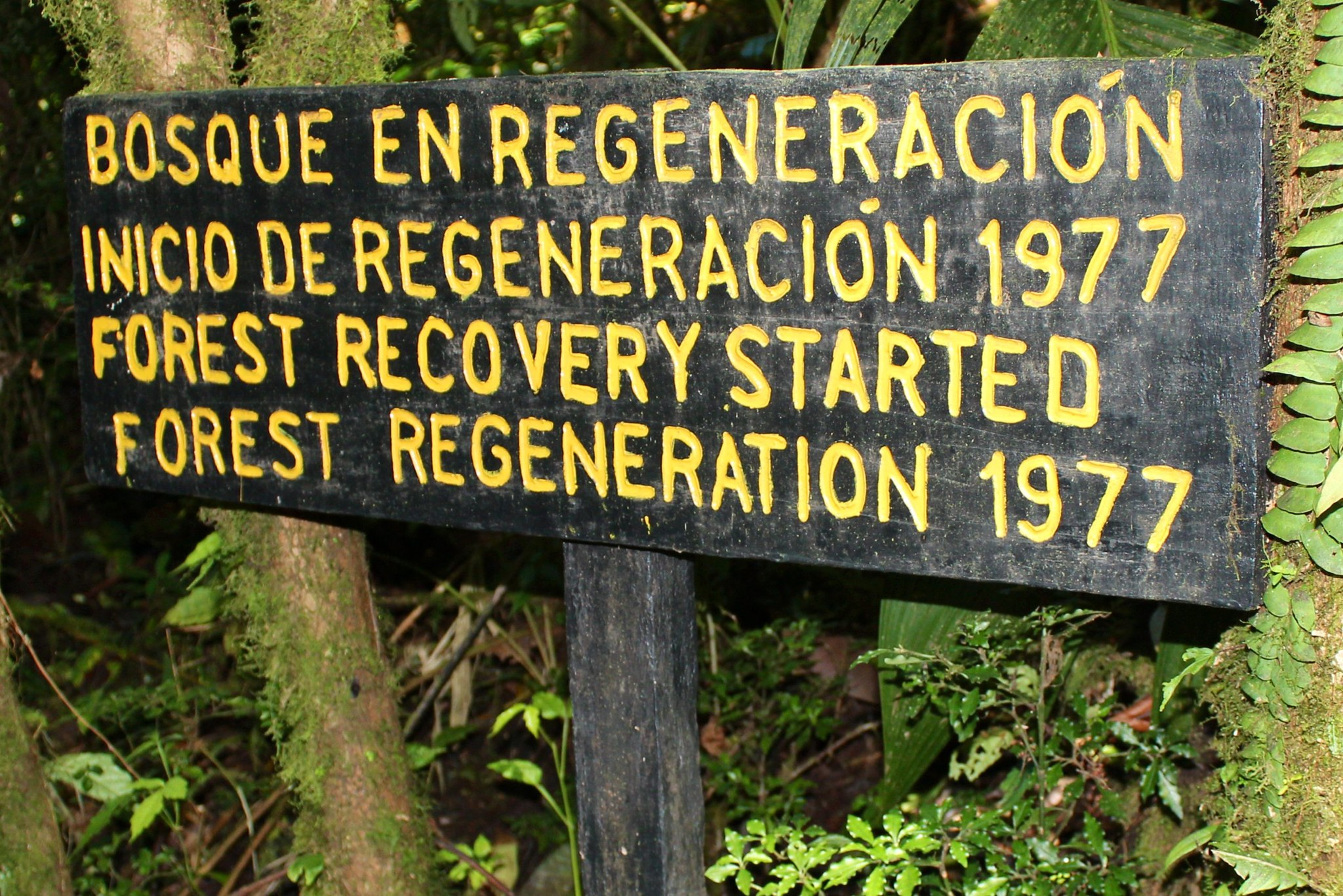 Forest recovery, Costa Rica