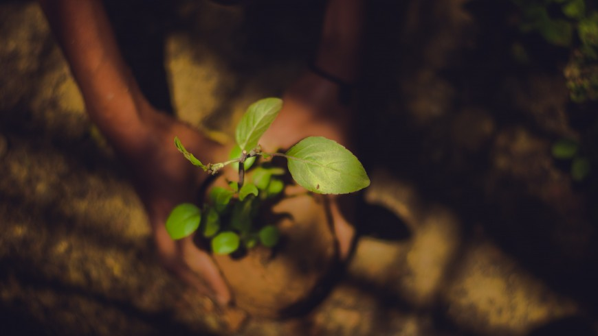 Person holding a green leaf plant, India