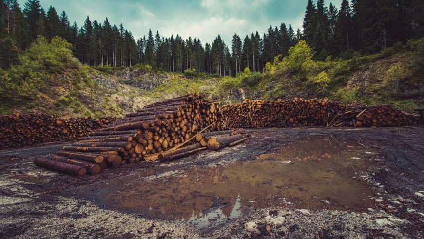 Forest after logging