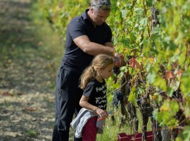biodynamic wine holidays in Slovenia