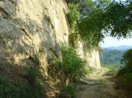 Apiculture Path