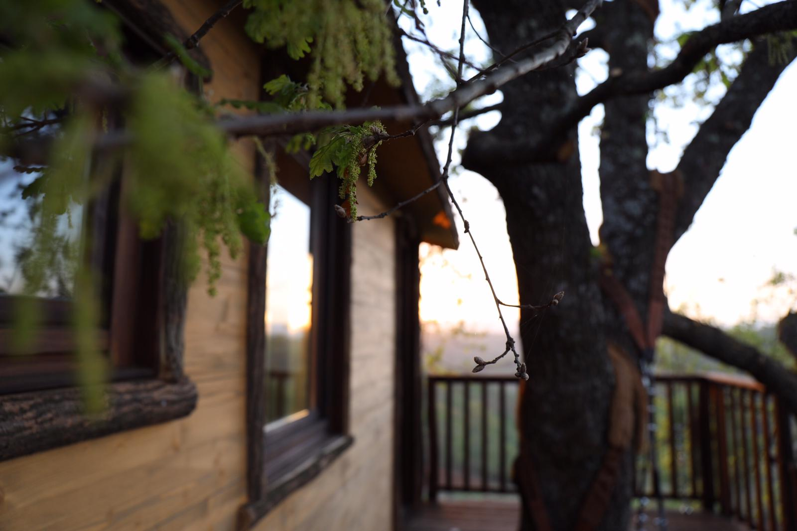 trehouse on oak