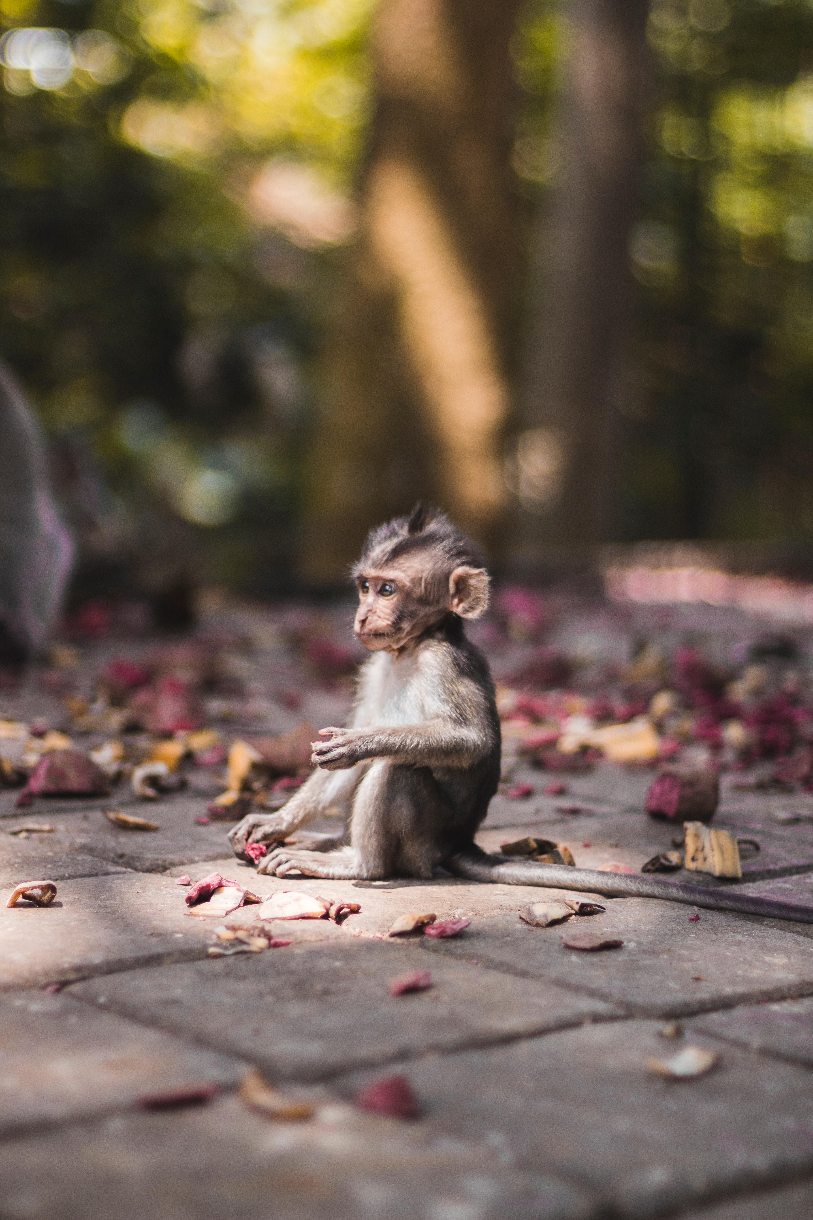 Baby monkey found in Sacred Monkey Forrest in Ubud, Bali