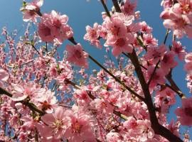 Holiday Home Enchanting - blossoming spring Hilll