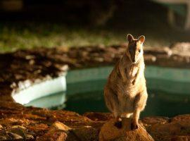 An escape in the nature of Australia