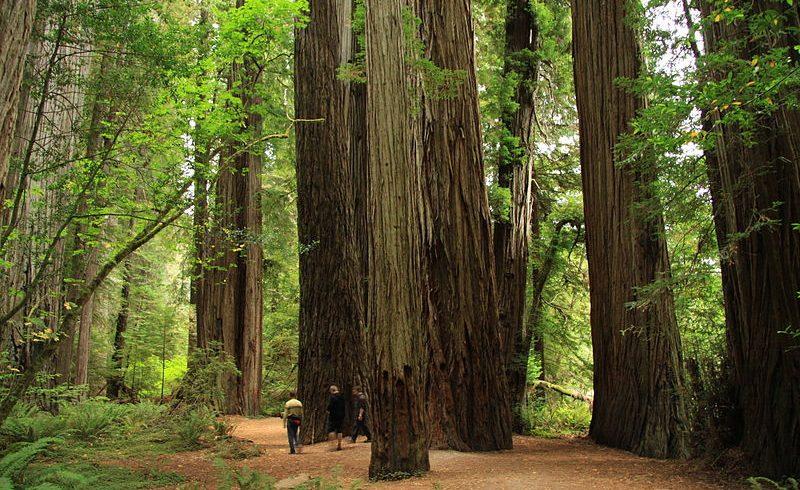 Boy Scout Trail, California