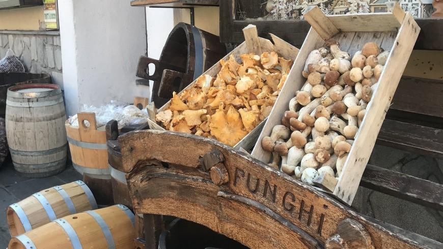 Mushroom stand, San Severino Lucano.