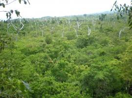 Falealupo Canopy