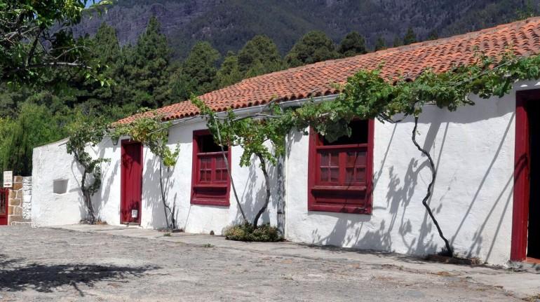 Among the vineyards of Tenerife