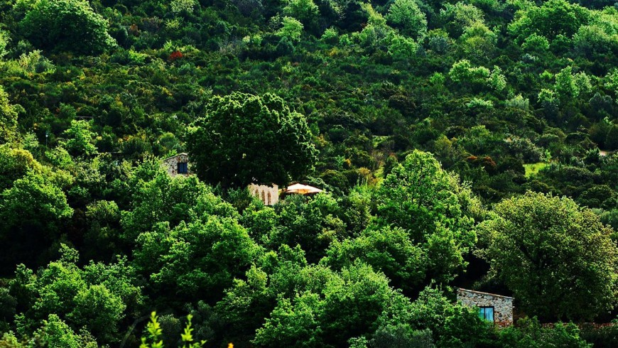 Il cannito ecolodge surrounded by nature of Cilento