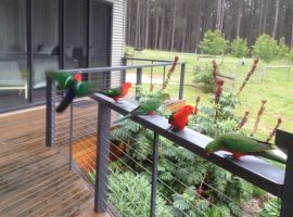Birds, kangaroos and wallabies within an hour of Melbourne