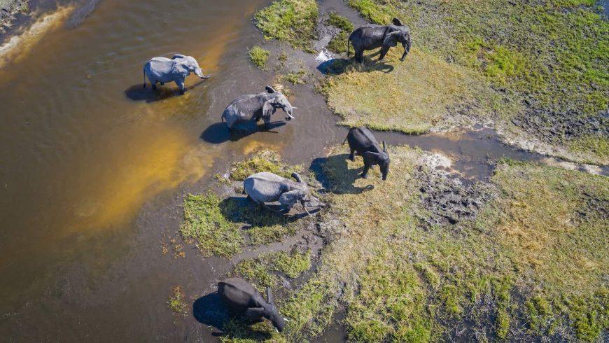 BEES Elephant Sanctuary