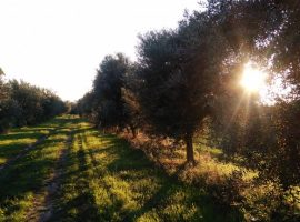 Birdwatching in Molise, Italy