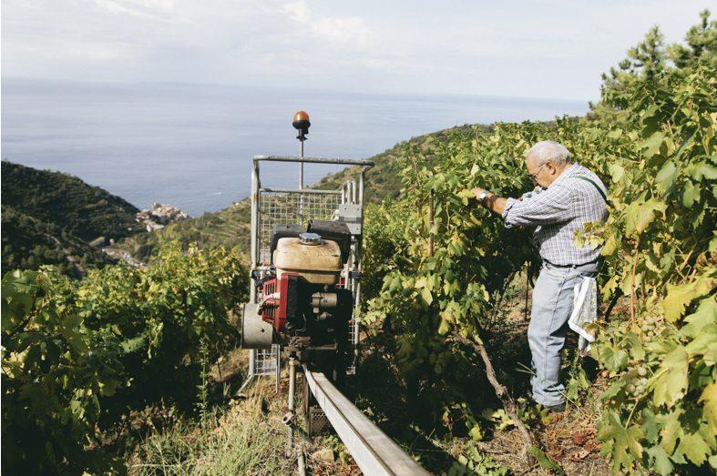 Heroic Winemaker in Cinque Terre