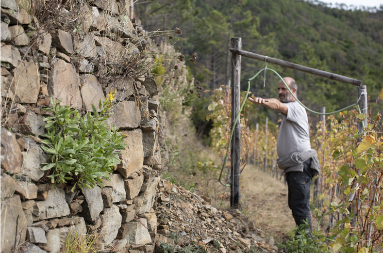 Grapes & Heroes: The Wine Growers of the Cinque Terre