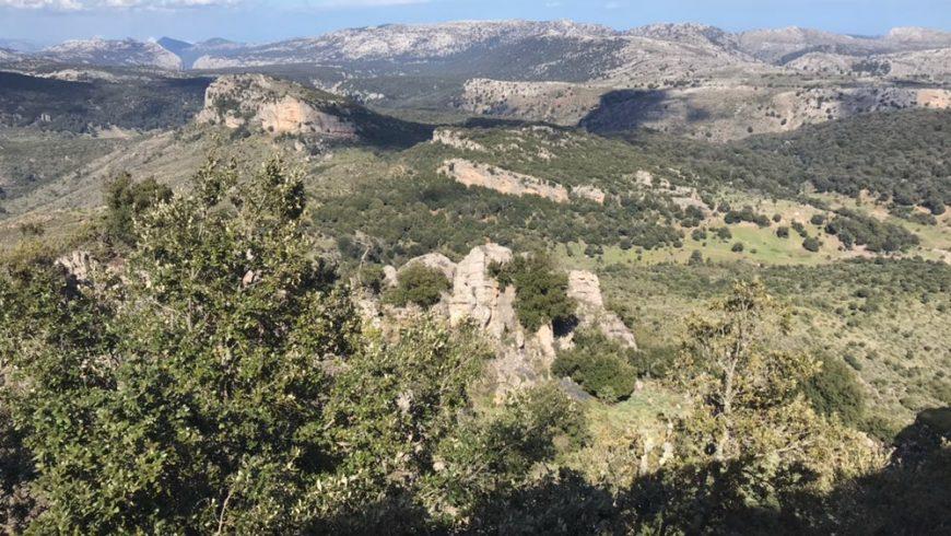 Forest of Montes, Sardinian Hinterland
