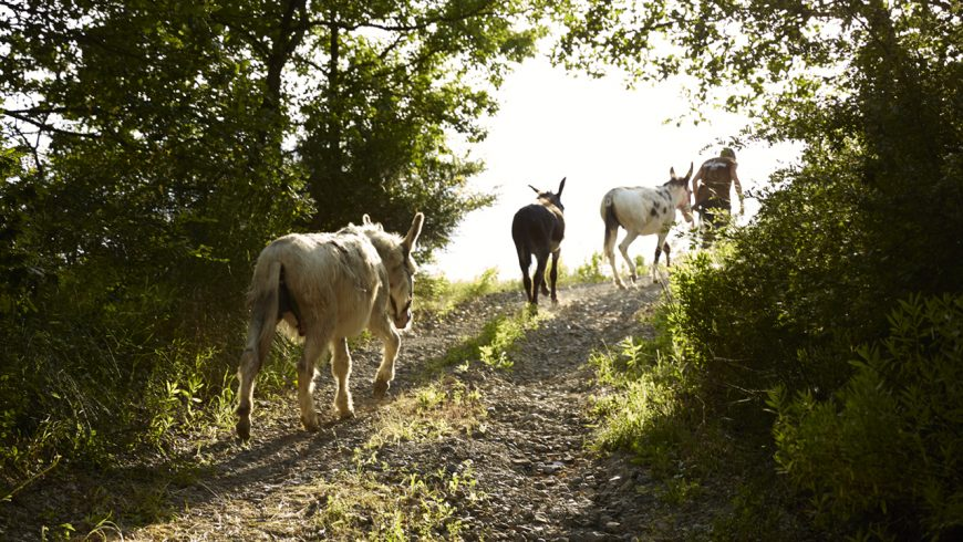 Walking with donkeys