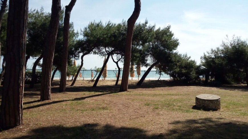 Pine forest in in Marine Protected Area of ​​Torre del Cerrano