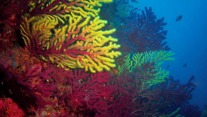 consequences of overtourism: corals destruction