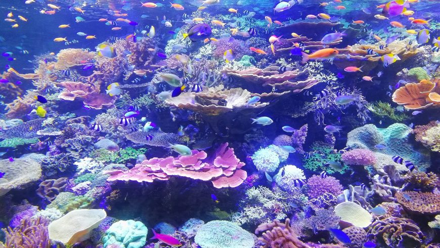 the loss of corals
