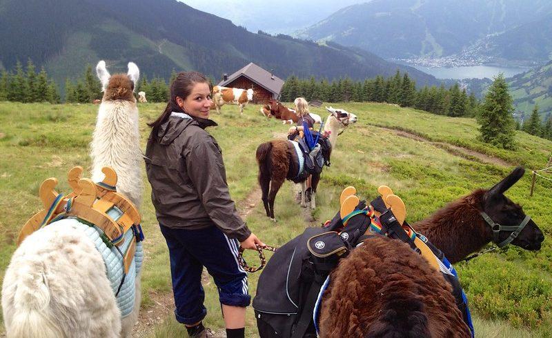 trekking with llama