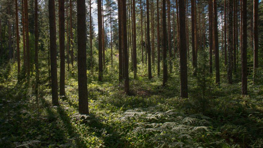 forest health biodiversity