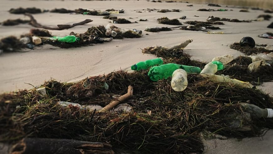 plastic pollution against whales